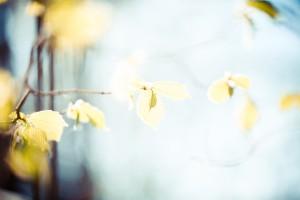 leaves-768782_1920